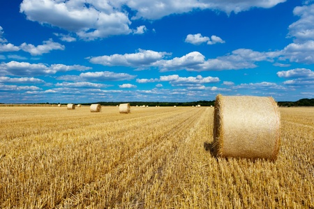 straw bales in a field with blue and white sky photo