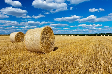 hay bales: straw bales in a field with blue and white sky