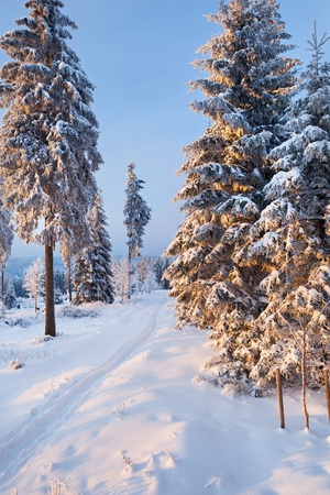 winter forest in Harz mountains, Germany photo