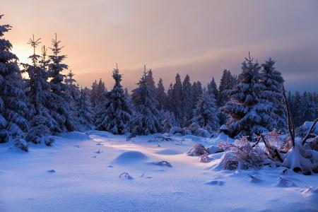 january sunrise: bosque de invierno en las monta�as de Harz, Alemania Foto de archivo