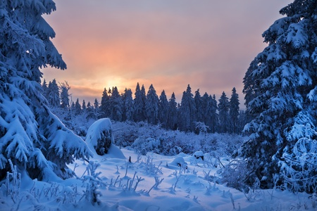 december sunrise: winter forest in Harz mountains, Germany Stock Photo