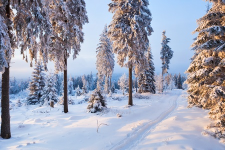 winter forest in Harz mountains, Germany Stock Photo - 9038933
