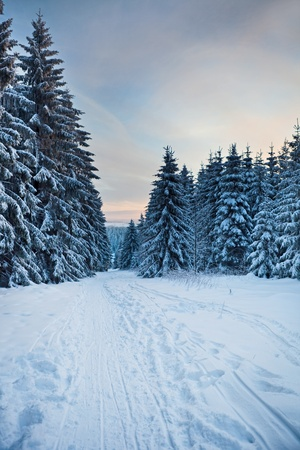 winter forest in mountains photo