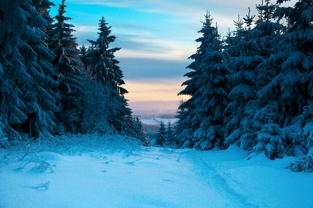 december sunrise: winter forest in mountains Stock Photo