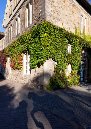 Outdoor view of green ivy fixed at the corner of an ancient stone wall house.