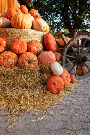 Autumnal decoration with pumpkins and straw. Lower Saxony, Germany