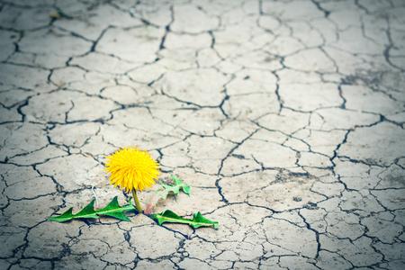 舗道から小さな木が割れます。植物の緑の芽が亀裂アスファルトを通して道を作ります。概念: 何も不可能ではない、何もあきらめないでください。