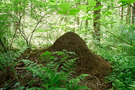 anthill:  1. ant-heap    2. anthill    3. formicary    4. rookery