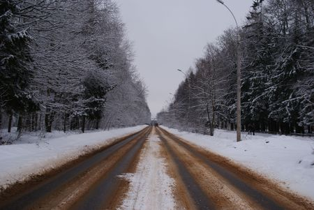 winter forest road photo