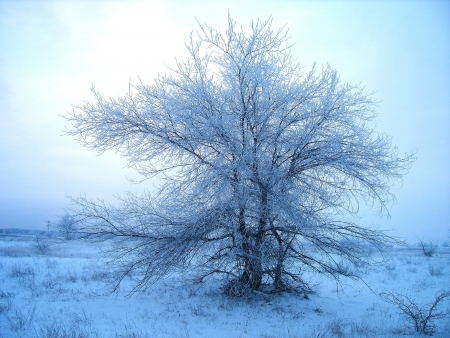 wintrily: winter landscape Stock Photo
