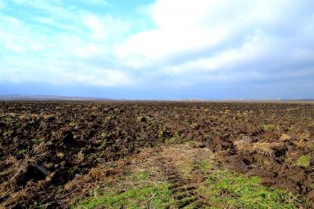 arable land: arable land