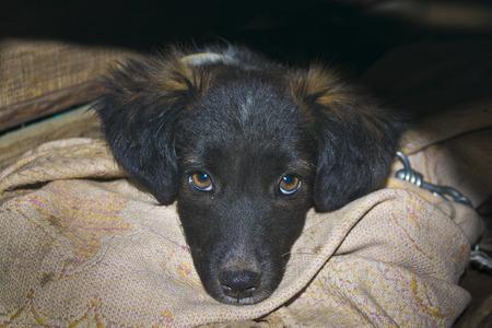 sad dog: sad dog Stock Photo
