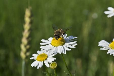 fleurs des champs: wildflowers Banque d'images
