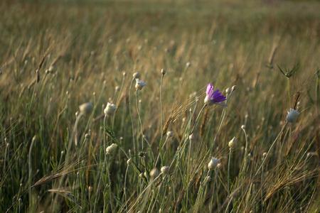 fleurs des champs: fleurs sauvages Banque d'images