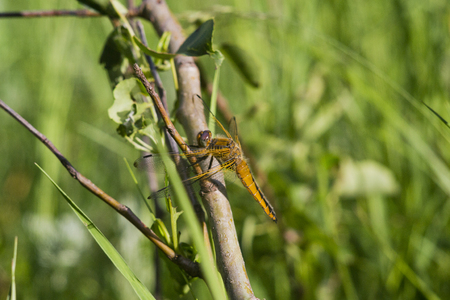 dragonfly background. Stock Photo