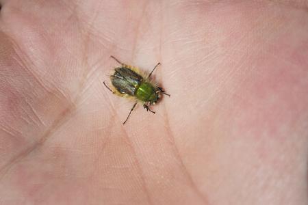 Beetle on a palm Stock Photo