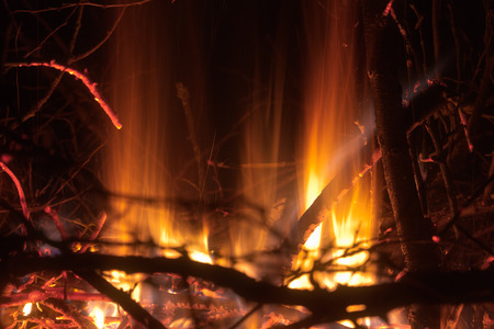 brushwood: Abstract flame bacjground: fire of burning brushwood (branches) closeup forming a specific pattern.