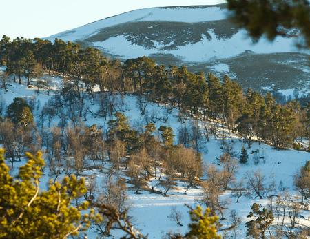 alight: Winter mountains panorama di sera (Caucaso, Russia): discese in montagna coperte di neve e pineta e scendere da domenica visibile attraverso modello dei rami di pino con cielo blu.