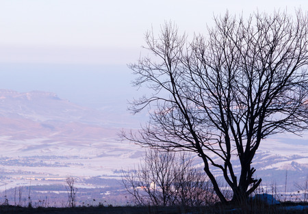 silhouette arbre hiver: L'image de la nature saisonni�re: Lonely Tree silhouette d'hiver avec paysage de montagne et de l'horizon (horizon). Peut �tre utilis� comme une carte postale ou papier peint.