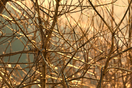 alight: Spring nature image: tree branches closeup alight by sunlight.  Stock Photo