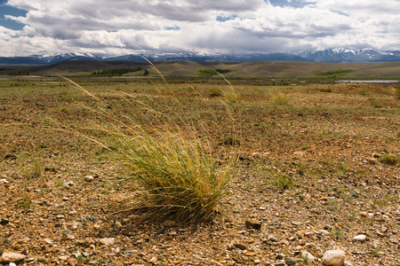 russia steppe: The Altai landscape (Russia) with a steppe or semi desert, mountains at the horizon and cloudy sky and a grass (some plants) as a foreground