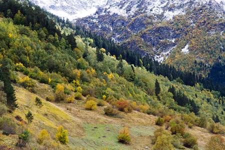 Nature season specific landscape: mountain descents by autumn covered by trees with green and yellow foliage and snow. Caucasus region (Russia) Imagens