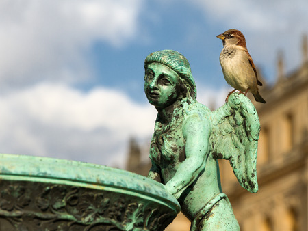 fasade: Old historical bronze sculpture of angel man in the Versailles palace park closeup with the palace fasade as a background and sparrow sitting on angels shoulder. Stock Photo