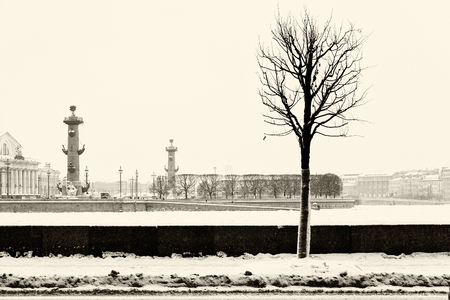 Landmark in St Petersburg, Russia: view from the Palace Embankment on the Spit of Vasilievsky Island by a winter day with lonely tree silhouette. Black and white retro photo.
