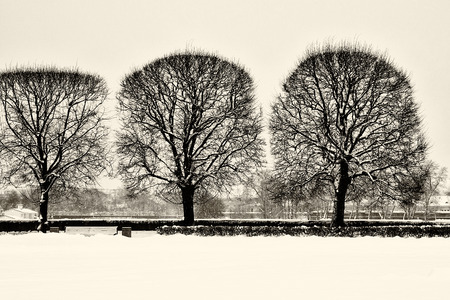 Touristic landmark in Saint Petersburg, Russia: the Spit of Vasilievsky Island covered by snow by a winter day with silhouettes of trees. Black and white retro photo. Фото со стока