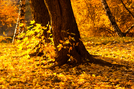 Trees in a park by an autumn day with yellow, green and red leaves and grass around covered by foliage.