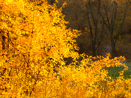 Trees in a park by an autumn day with yellow and red leaves and grass around covered by foliage.