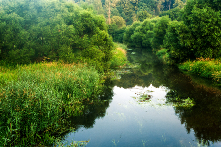 Summer morning landscape with little river, reflections on the water surface and green trees and plants around.