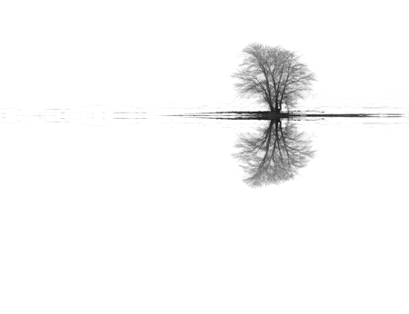 Seasonal nature white image: landscape with lonely unique winter tree in a misty snow plain (solitude concept) with reflections.