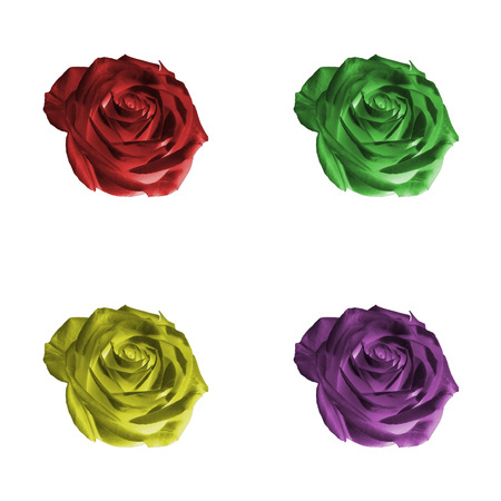 Floral pattern or background: set of four decorative colored (red, green, yellow, purple, violet) flowers - roses - closeup (close up) isolated on white backdrop. Фото со стока - 89906145