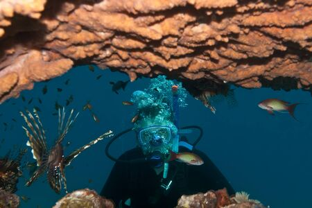 A diver and tropical fishes are underwater in Red sea