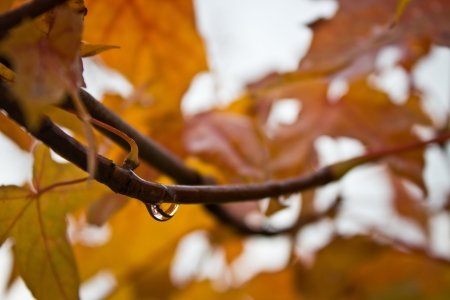 descriptive colours: Autumn leafs with waterdrop