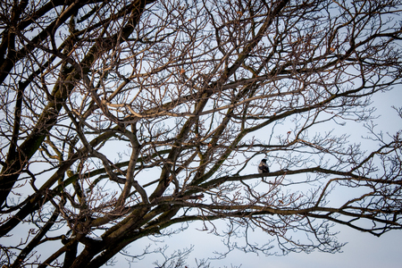 woodland  horror: Tree with a Crow