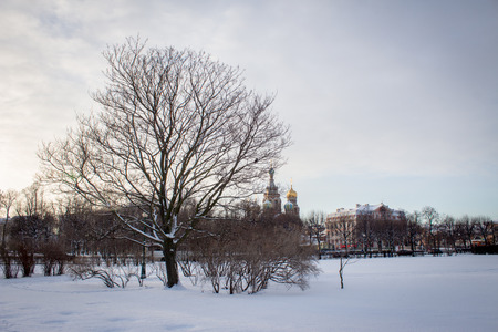 godly: Tree in front of Church of the Savior on Blood Stock Photo