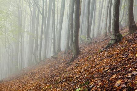 Mystic morning foggy forest landscape Stock Photo