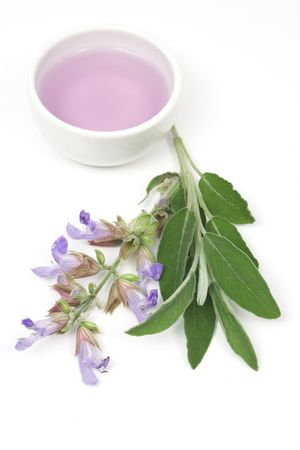 Sage plant and essential oil used for aromatherapy photo