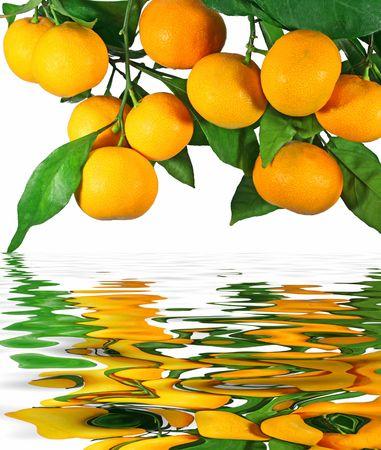 Mandarijnen op een boom met reflectie in water Stockfoto
