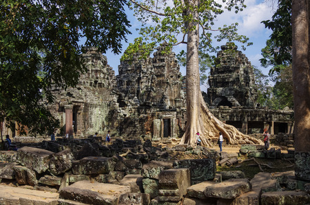 reap: Siem Reap, Cambodia - Big tree and ruins of Ta Prohm temple, Angkor area, Siem Reap, Cambodia