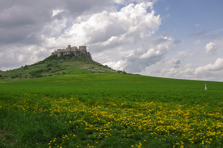 medow: The Spis Castle with flowers on medow - Spissky hrad National Cultural Monument ruins of medieval castle, Slovakia.