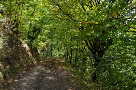 Dirt road thru Dilijan National Park, Armenia