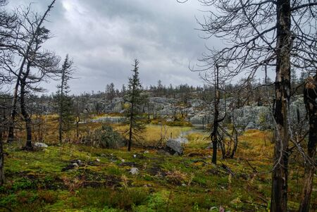 Small swamp on top of mountain Vottovaara with stones and dead trees, Karelia, Russia Banco de Imagens
