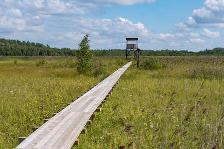 "Birdwatching tower and footbridge across the swamp at Bolshom rakovom (Big Crayfish) Lake. Eco route in the ""Rakovyye ozera"" (Crayfish lakes) nature reserve, Leningrad region, Russia"