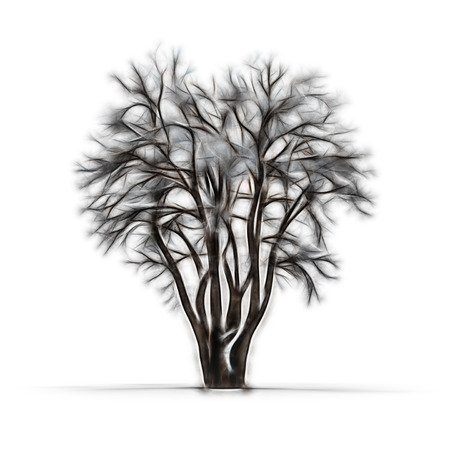 leafless: Sketch of winter tree without leaves on white background