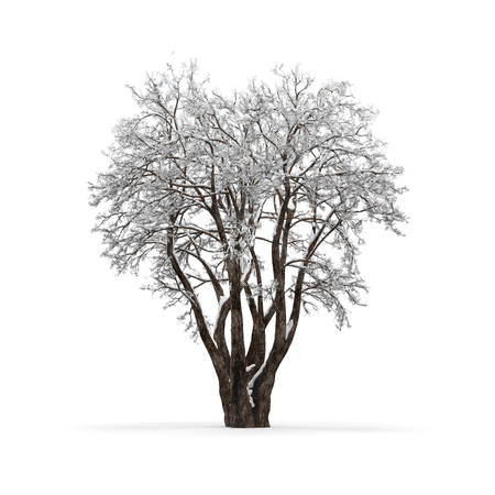 Winter tree without leaves on white background 3d rendering