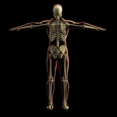 Digital skeleton model, 3d rendering, black background