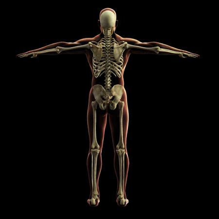 Modèle de squelette numérique, rendu 3D, fond noir Banque d'images - 85945960